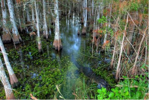 RV Adventure through the Everglades in Miami